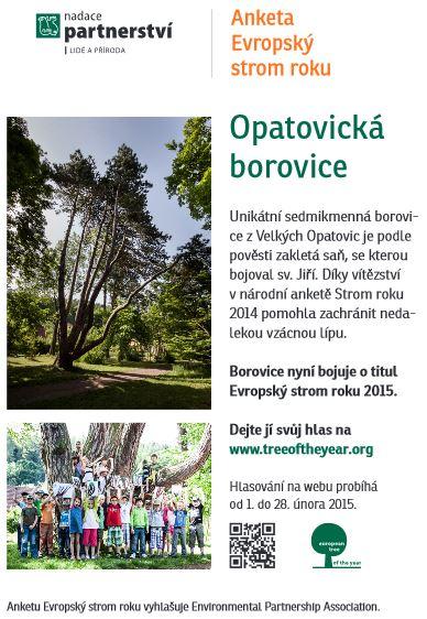 borovice opatovice